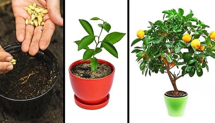 sembrar plantas en casa